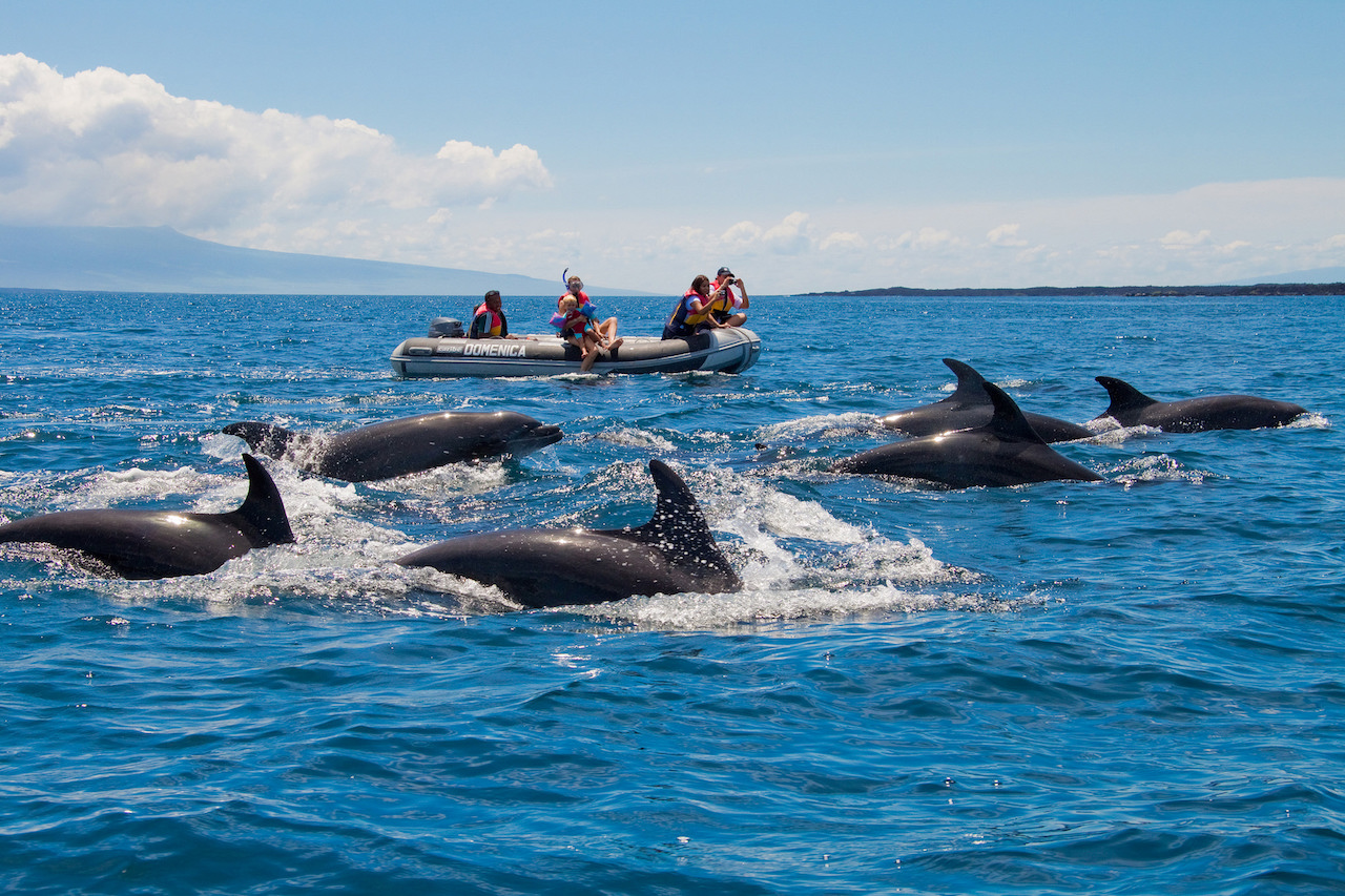 dolphin galapagos islands cruise