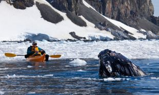 Antarctic Sea Kayaking