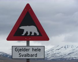 Arctic Summer in North Spitsbergen Photo 2