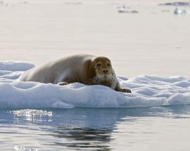 Arctic Summer in North Spitsbergen Photo 3