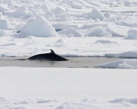 Arctic Summer in North Spitsbergen Photo 9