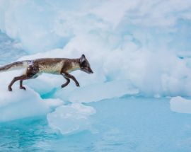 Epic 80°N: Exploring Greenland, Baffin & Ellesmere Islands Photo 9