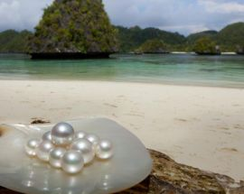 Raja Ampat Explorer Photo 6