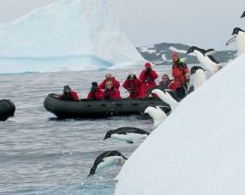 Marine Mammals of Antarctica Photo 7