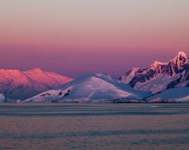 Marine Mammals of Antarctica Photo 9