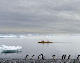 Marine Mammals of Antarctica Photo 11