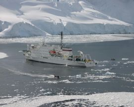 Marine Mammals of Antarctica Photo 12