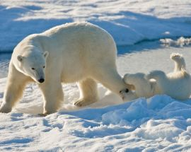 Russia's Far East & Wrangel Island Photo 2