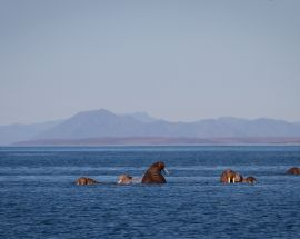 Kamchatka Coast: Jewel of the Russian Far East Photo 6